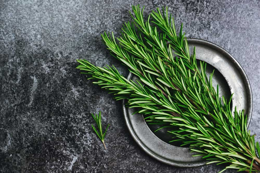 rosemary for grey hair